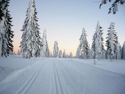 http://www.sonneneckerl.de/bilder/Winter%20im%20Bayerischen%20Wald%20Langlaufen.jpg